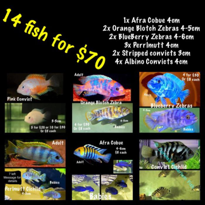 14 fish for $70 Only 1 pack available